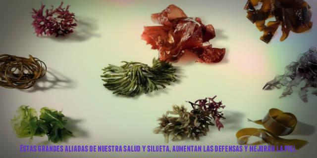 ALGAS NUESTRAS ALIADAS ENERGIZANTES Y DESINTOXICANTES